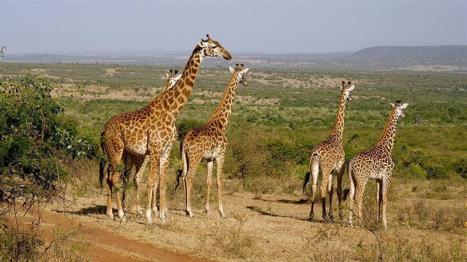 What Animals Live In Kenya?
